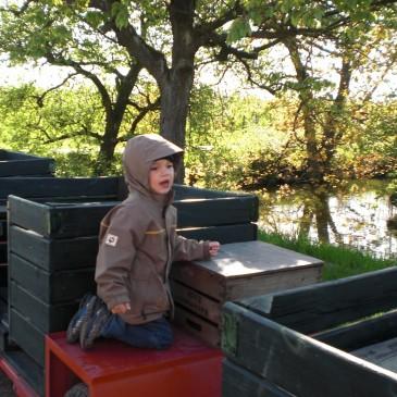 Apfelernte mit Kindern im Alten Land