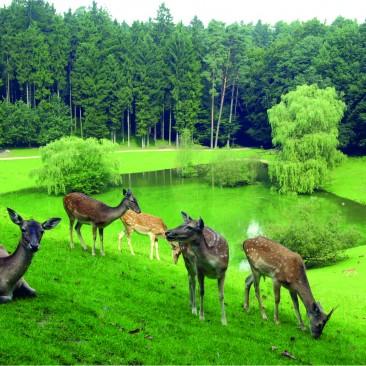 Tiere gucken & Natur erleben (c) Wildpark Schwarze Berge Freigehege