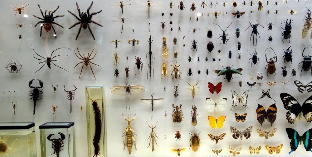 Schauvitrine Zoologisches Museum