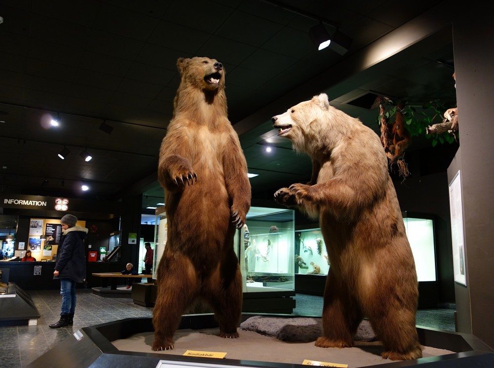 Ausflugstipp Zoologisches Museum